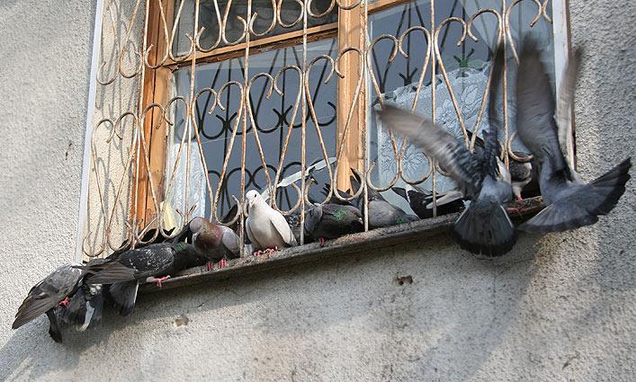 защита от голубей на подоконнике